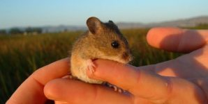 Why Plant Crops Don't Kill More Wildlife than Pasture Raised Animals