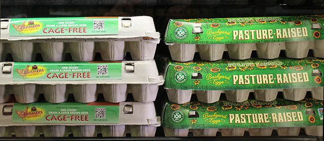factory farming cage free egg carton
