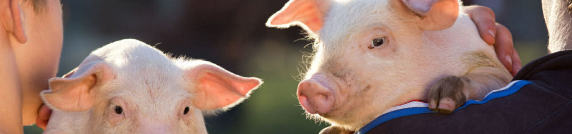 Free From Harm - Farm Animal Advocacy and Education