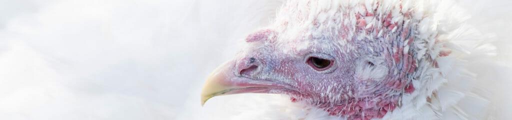 website_banner_turkey