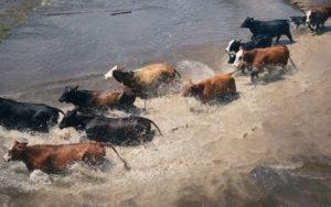 A Hurricane of Distortions Surrounding Animals and Veganism