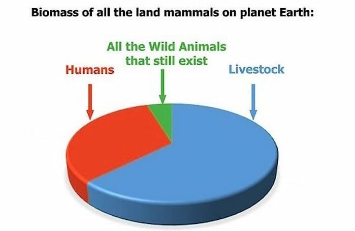 human livestock wildlife biomass