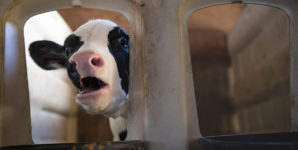 'Hardly Ever' and 'Only a Drop': Why Animal Suffering Is Not Scalable