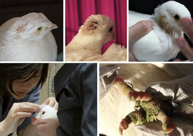 various photos of injured birds