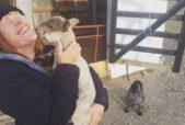 baby animal kissing human