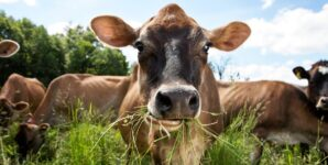 Claim That Grass-Fed Cow's Milk Is Greener Than Soy Milk Was Consumer Fraud