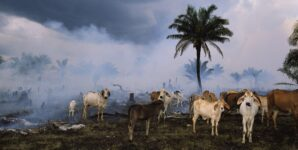 Demand That False Claims of Soy Milk Driving Deforestation Be Retracted