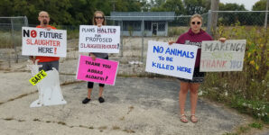 Owner Shelves New Slaughterhouse Plans After Negotiations with Activists